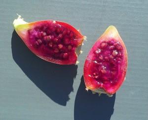 kaktuksen hedelmiäkorj